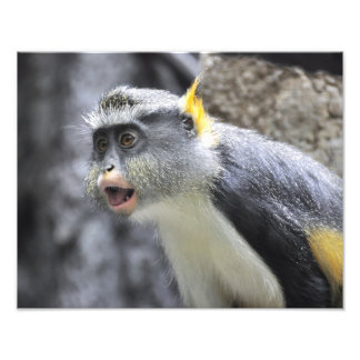Mono coloreado Multi del lobo Impresion Fotografica