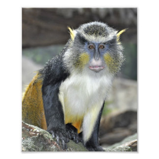 Mono coloreado Multi del lobo Cojinete