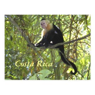Mono Costa Rica del capuchón de la postal