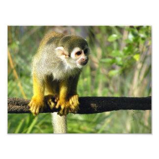 Mono curioso por los arces de Don Fotografias