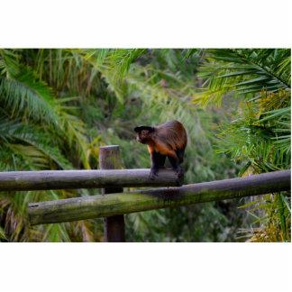 mono dado vuelta lejos en la verja escultura fotográfica