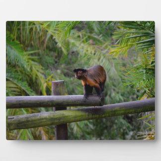 mono dado vuelta lejos en la verja placa