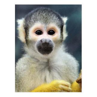 Mono de araña adorable postal