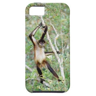 Mono de araña en el parque zoológico de Belice iPhone 5 Cárcasas