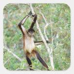 Mono de araña en el parque zoológico de Belice Pegatina Cuadrada