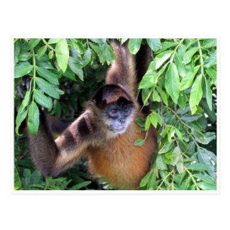 mono de araña tarjeta postal