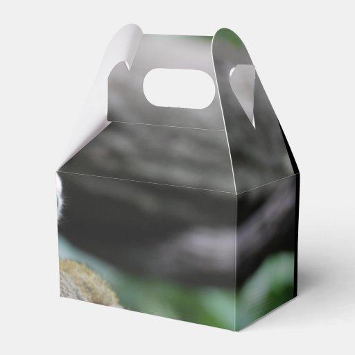 Mono de ardilla adorable del bebé paquetes de regalo
