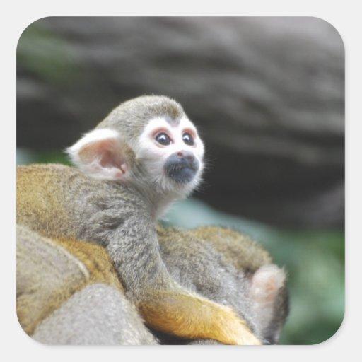 Mono de ardilla adorable del bebé colcomanias cuadradases