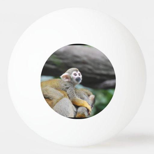 Mono de ardilla adorable del bebé pelota de ping pong