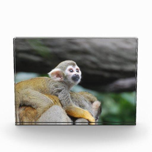 Mono de ardilla adorable del bebé