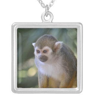 Mono de ardilla asombroso colgante cuadrado
