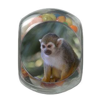 Mono de ardilla asombroso frascos de cristal