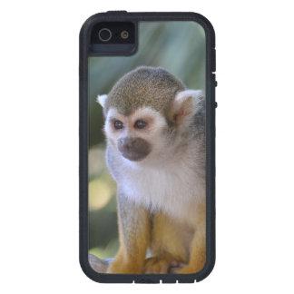 Mono de ardilla asombroso funda iPhone SE/5/5s