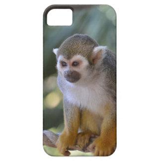 Mono de ardilla asombroso funda para iPhone SE/5/5s