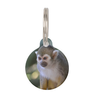 Mono de ardilla asombroso placas para mascotas