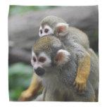 Mono de ardilla bandanas