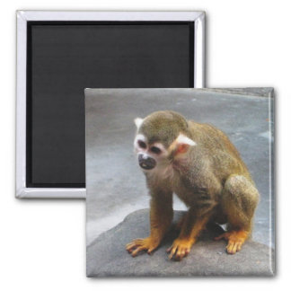 Mono de ardilla común imán cuadrado