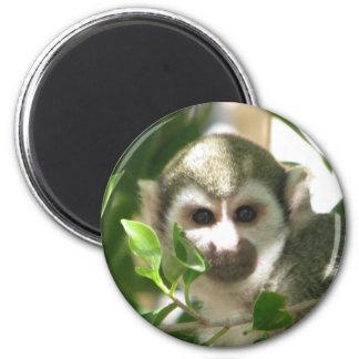Mono de ardilla común imán redondo 5 cm