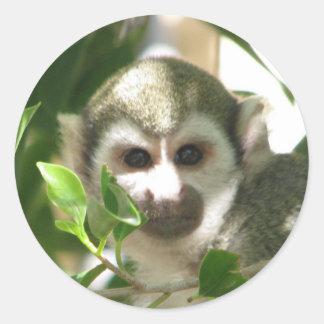 Mono de ardilla común pegatina redonda