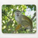 Mono de ardilla común (sciureus) del Saimiri Río Alfombrillas De Raton