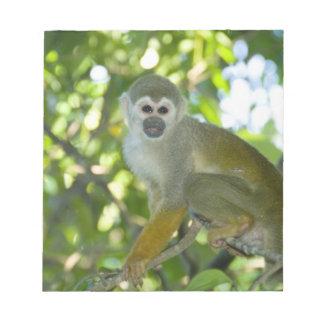 Mono de ardilla común (sciureus) del Saimiri Río Bloc De Notas