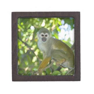 Mono de ardilla común (sciureus) del Saimiri Río Cajas De Joyas De Calidad