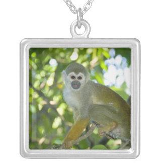 Mono de ardilla común (sciureus) del Saimiri Río Colgante Cuadrado