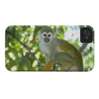 Mono de ardilla común (sciureus) del Saimiri Río Case-Mate iPhone 4 Funda
