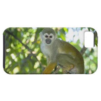 Mono de ardilla común (sciureus) del Saimiri Río iPhone 5 Fundas