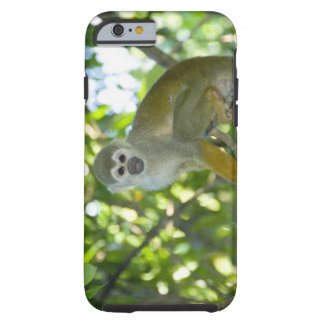 Mono de ardilla común (sciureus) del Saimiri Río Funda Resistente iPhone 6