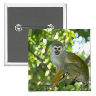 Mono de ardilla común (sciureus) del Saimiri Río Pins