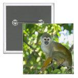 Mono de ardilla común (sciureus) del Saimiri Río Pin Cuadrado
