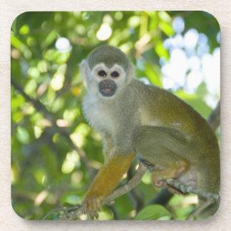 Mono de ardilla común (sciureus) del Saimiri Río Posavaso