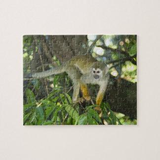 Mono de ardilla común, (sciureus del Saimiri), Río Puzzle