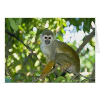 Mono de ardilla común (sciureus) del Saimiri Río Felicitación