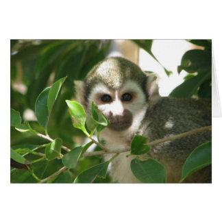 Mono de ardilla común tarjetón