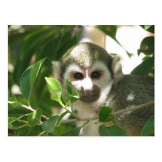 Mono de ardilla común postal