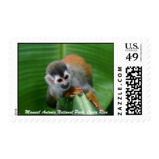 Mono de ardilla, Costa Rica Envio