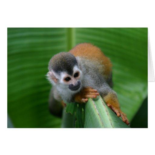 Mono de ardilla Costa Rica Tarjeta De Felicitación