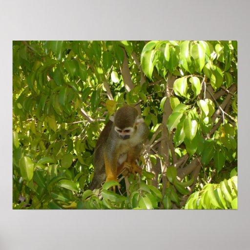 Mono de ardilla del bebé poster