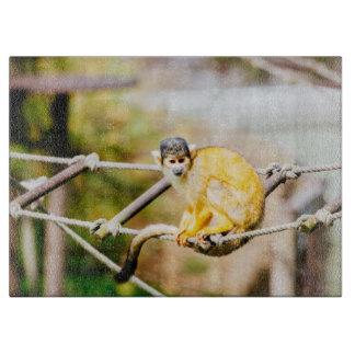 Mono de ardilla - fotografía animal tablas de cortar