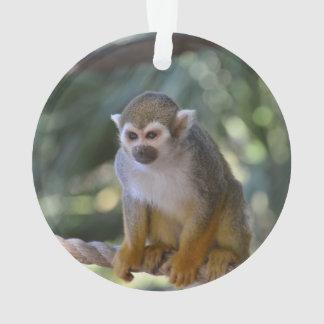 Mono de ardilla inquisitivo