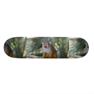 Mono de ardilla inquisitivo monopatin