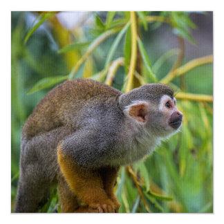 Mono de ardilla invitación 13,3 cm x 13,3cm