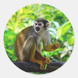 Mono de ardilla lindo pegatina redonda