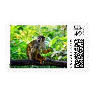 Mono de ardilla lindo envio