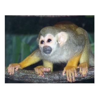 Mono de ardilla que se agacha tarjetas postales