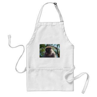Mono de Barbary hermoso Delantal