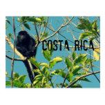 Mono de chillón de Costa Rica Tarjeta Postal