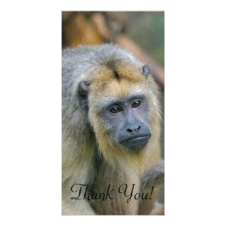 Mono de chillón de mirada triste tarjetas fotográficas
